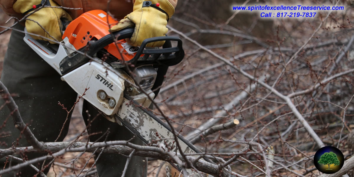 Tree Trimming | Tree Removal | Tree Care | Spirit of Excellence Tree Service.com